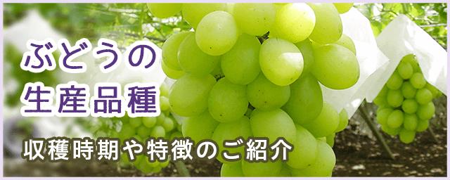 ぶどうの生産品種 収穫時期や特徴のご紹介